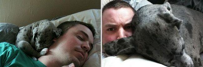 awebic-animais-antes-depois-11
