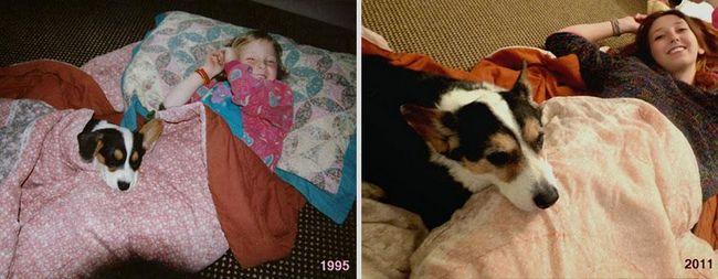 awebic-animais-antes-depois-7